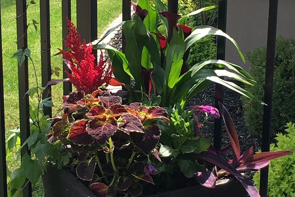 Container planting designed and maintained by our gardening division.