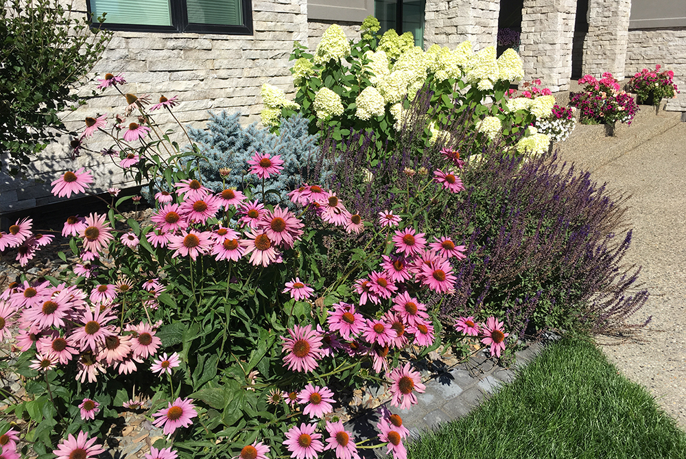 Lush flowerbed maintained by our gardeners.