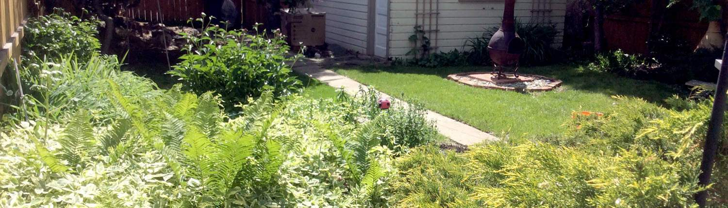 Lush plantings, weeded and trimmed